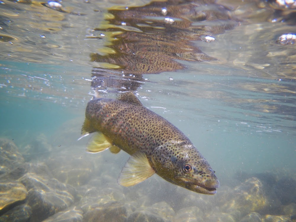 Bozeman Fly – Fishing Guides and Outfitters